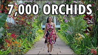 NYC Travel Guide: 2019 Orchid Show New York Botanical Garden