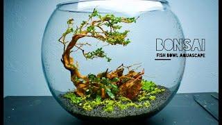 Bonsai Fishbowl Aquascape Youtube