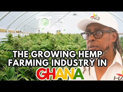 Is Hemp Farming the Future of Ghana: Hempire Ghana | 17 Apr 2021