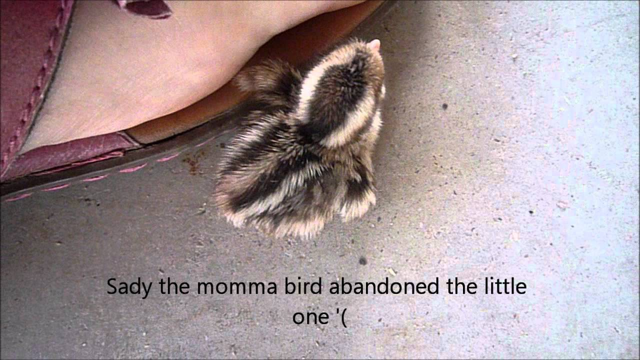 how to get a baby bird to eat