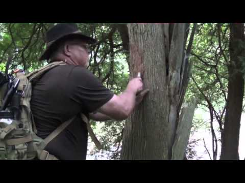 How to Find Fire-Starting Tinder in Woods  Part 1