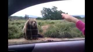 Мегапозитив! Медведь прощается с посетителями