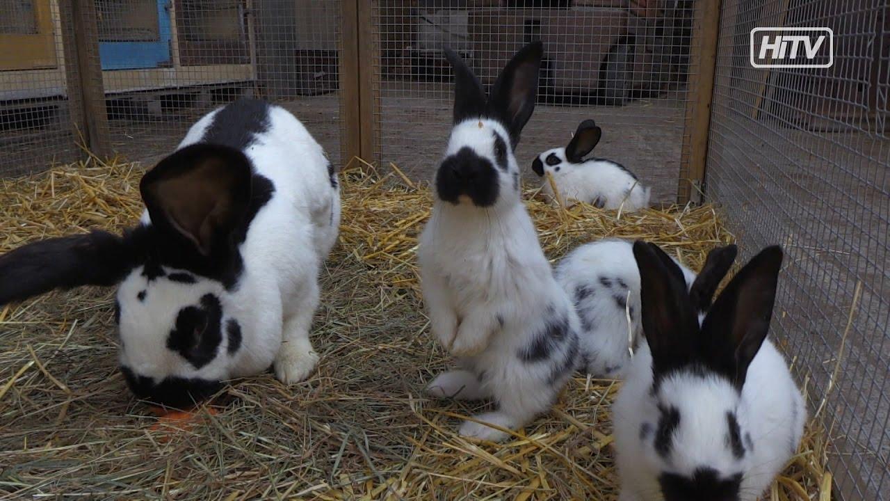 Tiergefluster Kaninchenzucht Monika Grasser Youtube