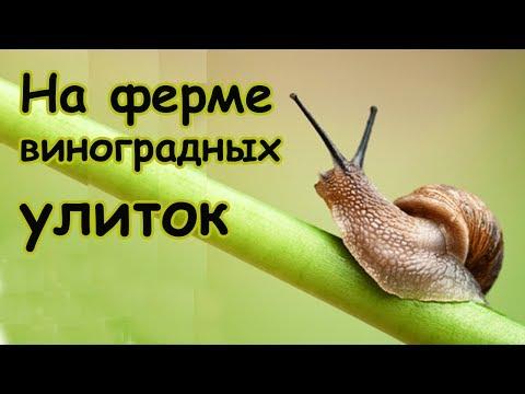 Ферма Виноградных улиток
