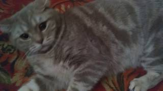 Кот говорит на Х.. я полез. Смешно до слёз ...