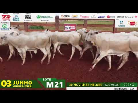 LOTE M21