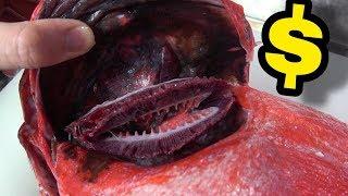 最近高級魚続きです。まだ続きます ☆セカンドチャンネル⇒https://www.youtube.com/channel/UCEAvwlv0ZtJrSsgaA2CewOw ☆line ...