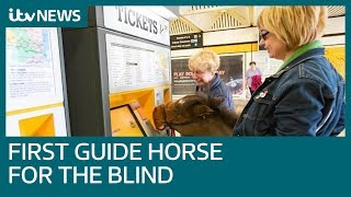 First guide horse for the blind comes to Britain | ITV News