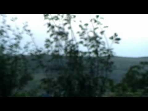 Ana-Maria AVRAM: SWARMS (III) for string quartet (1993- rev. 2009)