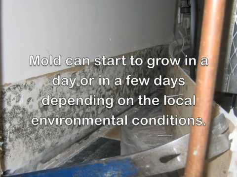 how-to-dry-out-water-damage,-leaks,-floods-with-dehumidifiers-and-cleanup-mold-with-airscrubbers