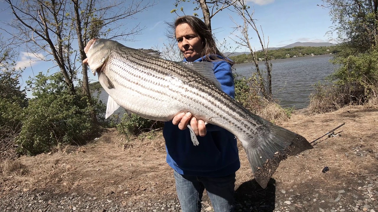 how to catch stripers in the hudson river