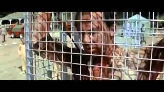 Krvavý tábor / Turkey Shoot CZ celý film, český dabing, akční, thriller, sci fi