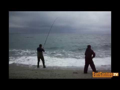 PESCA COL VIVO - leccia amia gigante dalla spiaggia