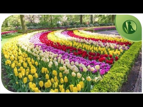 As Flores mais Bonitas do Mundo com Música para Relaxar ✾✿❀❁ Musica para Dormir, Meditar, Bem Estar