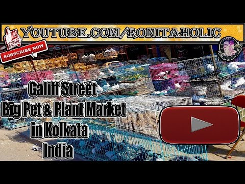 Galiff street || Big Pet & Plant Market || Kolkata || India