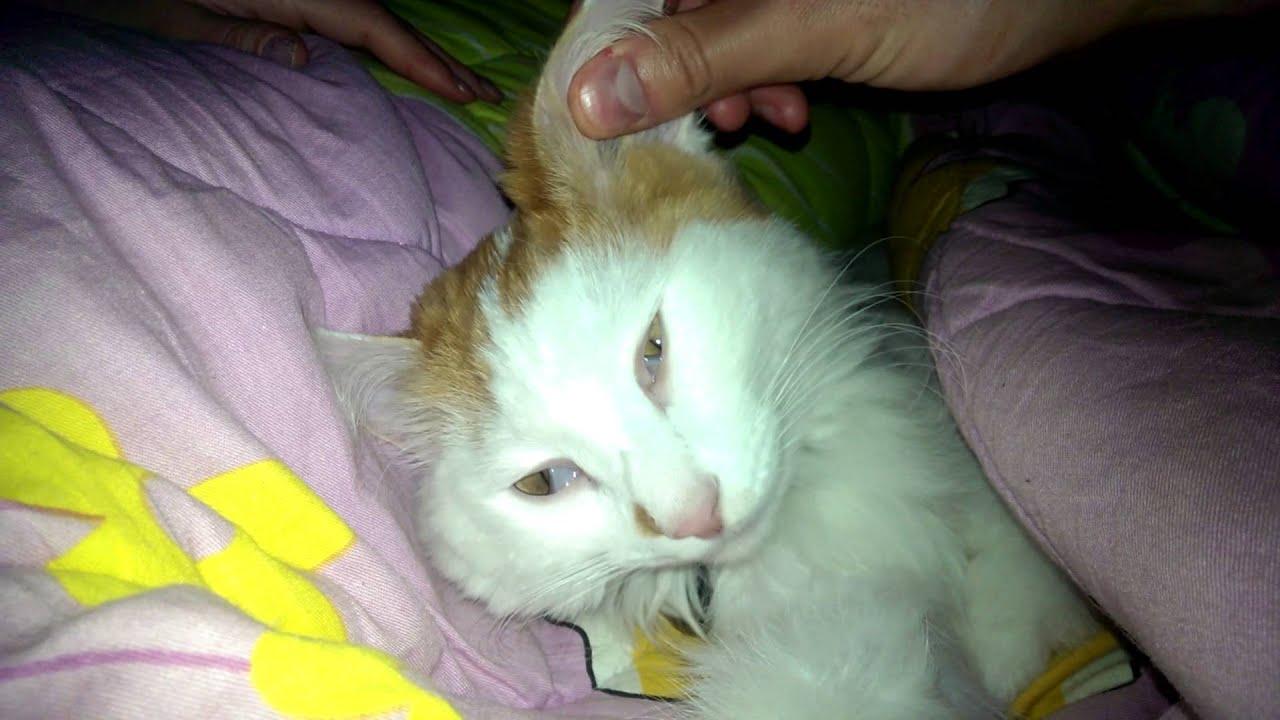 Фото мертвый кот