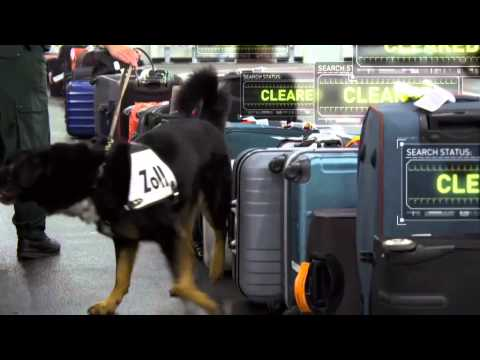 X-Ray Mega Airport: Drug Sniffing Dog