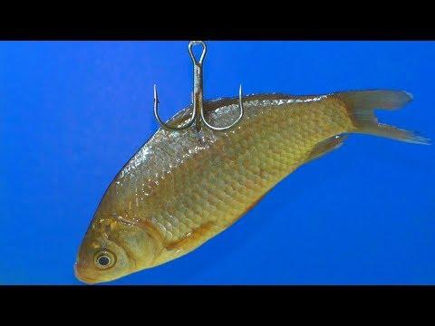 Как связать двойной поводок для ловли на живца  Рыбалка на жерлицы и поплавок