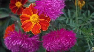 Сад-огород с клумбами - грядками. В моем огороде живут солнышко и хорошее настроение!!!