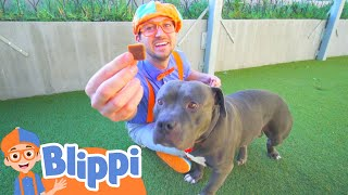 Blippi Learns About Animals For Kids At The Animal Shelter | Educational Videos For Toddlers
