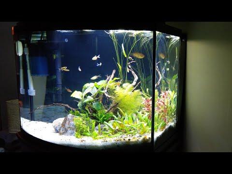 New Aquarium Update!!! Aqueon 36 Gallon Bowfront Ensemble
