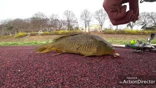 루어낚시로 잉어잡는방법 Catch carp with lure fishing.
