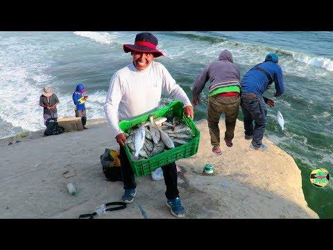 Mira las Técnicas que usan estos Pescadores - Excelente Pesca con la Mejor Carnada