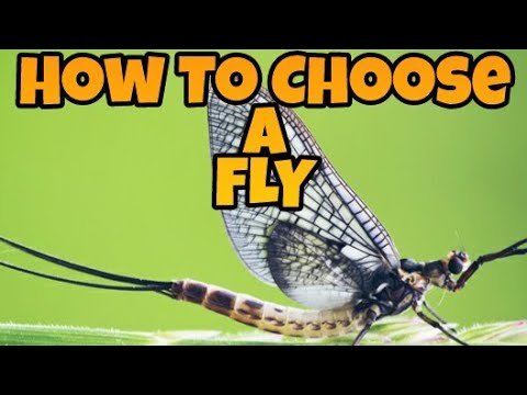 Fly Fishing For Beginners 101 - Ep.2 How To Choose A Fly & Identify A Fly