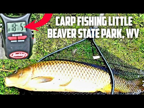 CARP FISHING AT LITTLE BEAVER STATE PARK WEST VIRGINIA (UNEDITED)