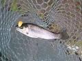 【管釣り】またまた管釣りに行ってきました