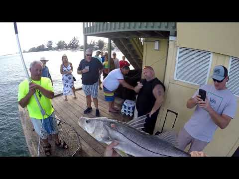 Epic Snook Bite All Day On Lizardfish