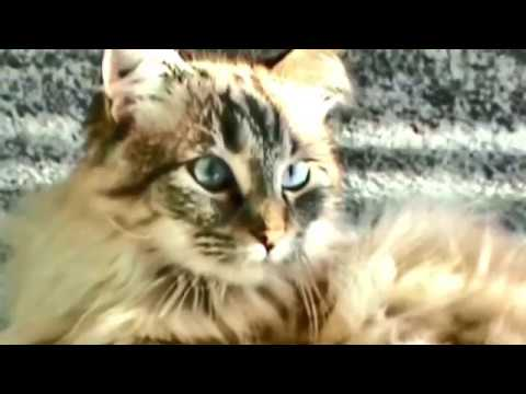 UNUSUAL NAMES AND BREEDS OF CATS