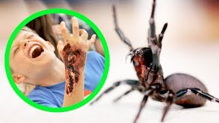 THE MOST DANGEROUS SPIDERS IN AUSTRALIA (TOP 10)