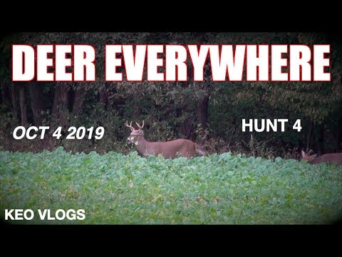 Deer Everywhere! Hunting A Cut Corn Field