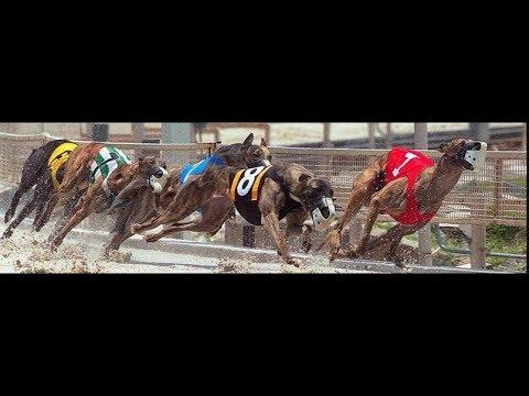 dog race in Pakistan