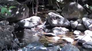 Lack Creek at back of 9.59 acre Shasta County property - June 17, 2013