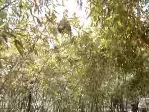 Bamboo Garden of Campus, Beijing