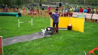 Agility Demo At The Debella Dog Walk