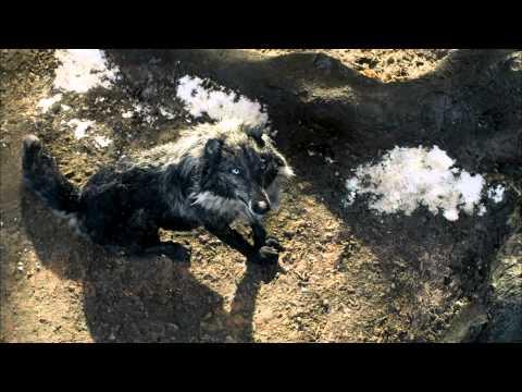 Мультфильм петя и волк 2006 смотреть онлайн
