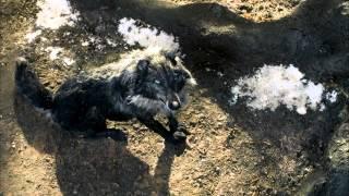 Петя и волк (2006)