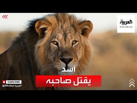 أسد يفترس صاحبه ويقتله في الرياض  - نشر قبل 10 ساعة