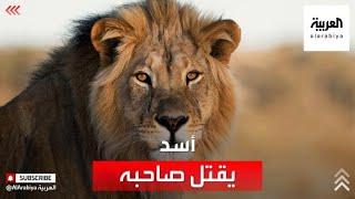 أسد يفترس صاحبه ويقتله في الرياض