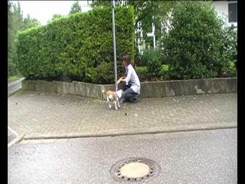 Hund ausgesetzt! Schüler für Tiere drehen Aufklärungsfilm...