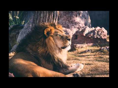 Alpha Motivation -  Love the Process ft.  Eric Thomas