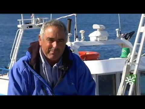 """Captura del atún rojo con la técnica del """"Green Stick"""" en Tarifa (Cádiz)"""