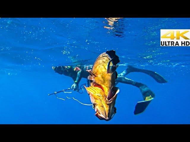 ❌❌ΧΩΡΙΣ ΨΑΡΟΝΤΟΥΦΕΚΟ❌❌ΥΠΟΒΡΥΧΙΟ ΨΑΡΕΜΑ ΜΕ ΚΑΜΑΚΙ ΣΤΟ ΑΝΑΤΟΛΙΚΟ ΑΙΓΑΙΟ |Spearfishing Life 🇬🇷 [4K]✅
