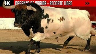 Imagen del video: TOROS: Concurso de recorte libre en Daganzo de Arriba