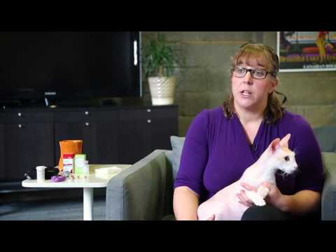 Diet Options For Diabetic Cats