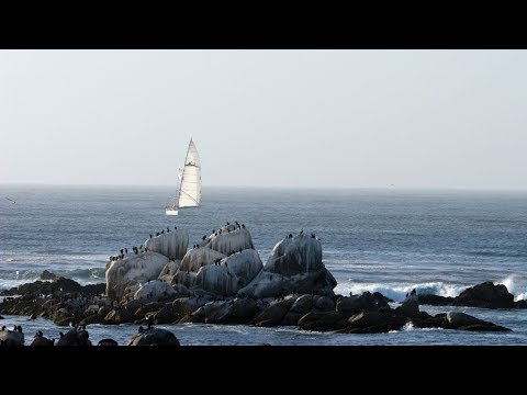 Live Monterey Bay Cam - Monterey Bay Aquarium
