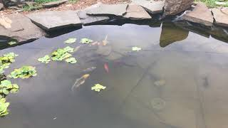 Ryan McNulty's Turtle Pond